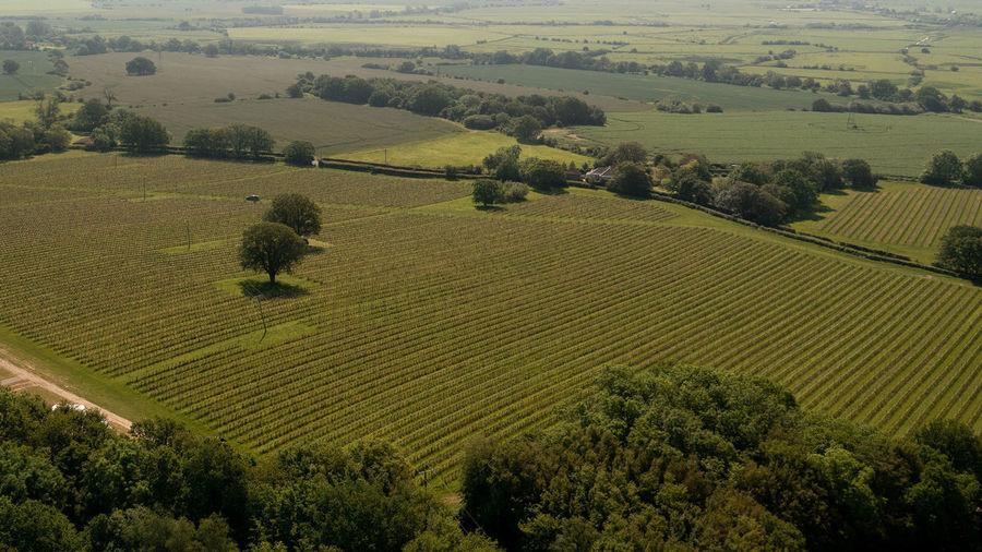 Gusbourne Vineyards