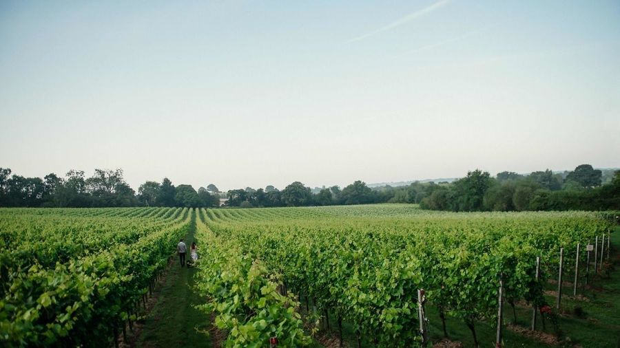Gusbourne Vineyard Self-Guided Tour